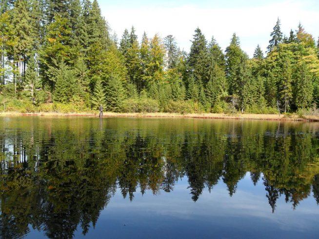 На Закарпатті знаходиться унікальне Дике озеро (фото)