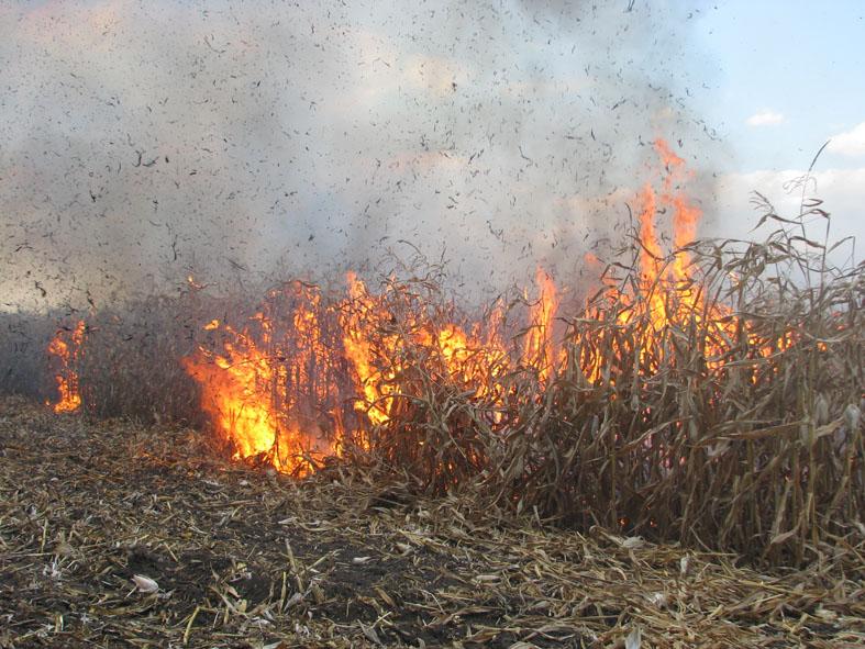На Берегівщині горіло кукурудзяне поле