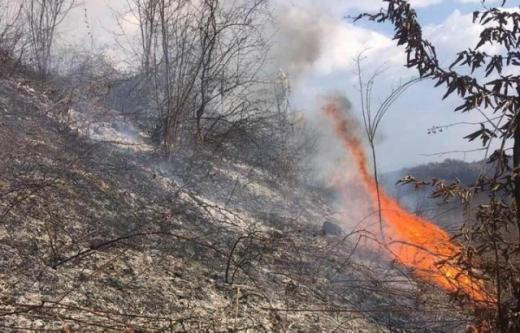 Майже добу на Тячівщині боролися із загоранням сільгоспугідь