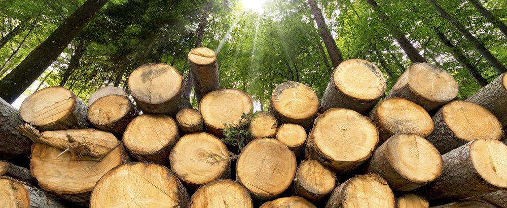На Закарпатті викрито схему злочинного експорту деревини до ЄС за допомогою подвійного використання товарних накладних