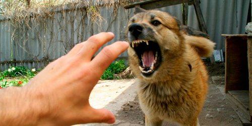 У Іршаві в собаки виявили сказ