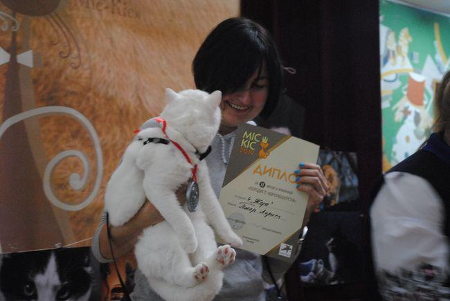 В Ужгороді відбувся конкурс краси серед котячих