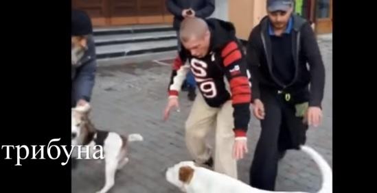 В Ужгороді собаки ледь не спровокували бійку між їх господарями (відео)