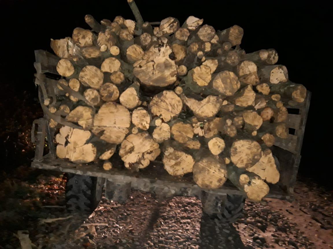 На Закарпатті прикордонники затримали вантажівку з незаконно зрубаною деревиною