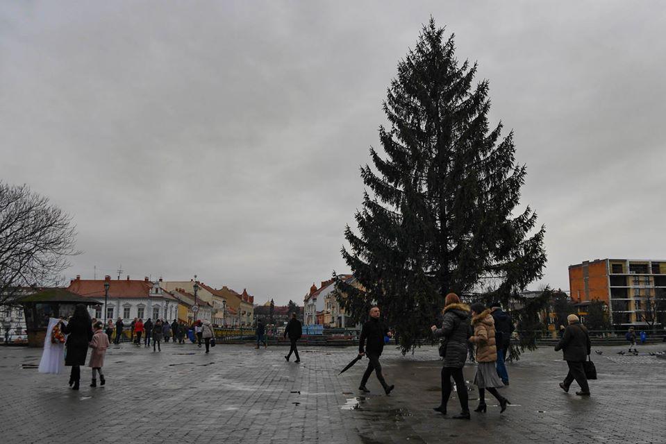 На площі Театральній в Ужгороді встановили святкову ялинку