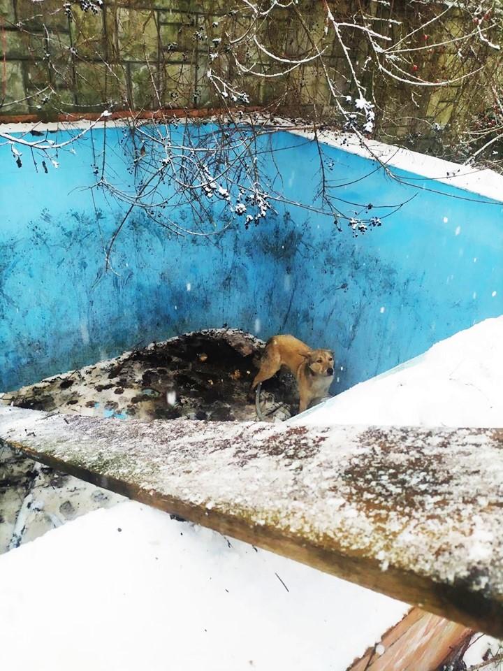 В Ужгороді поліцейські врятували пса, який просидів два дні у порожньому басейні закинутого готелю