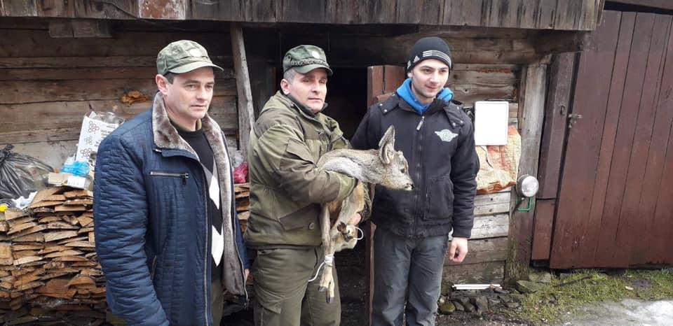 На Тячівщині житель Усть-Чорної та лісівники врятували козулю