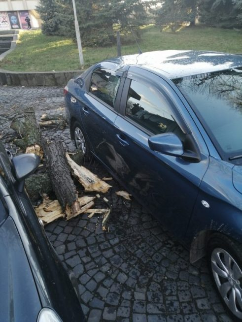 В Ужгороді трухлява гілка впала на автомобіль і пошкодила його (ФОТОФАКТ)