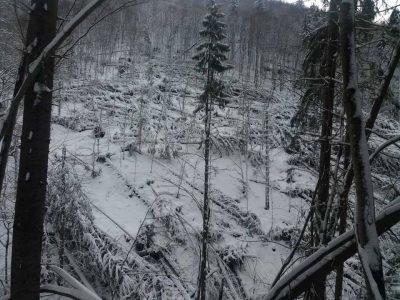 У лютому вітровал пошкодив на Рахівщині більше 27 гектарів лісу