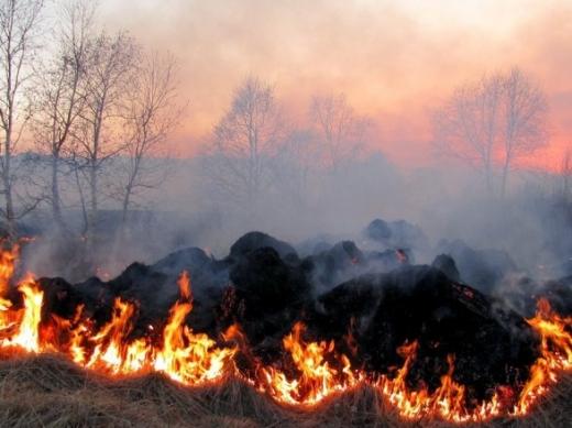 Прокуратура скерувала до суду обвинувальний акт щодо молодика, який спалив близько півгектара лісу на Перечинщині