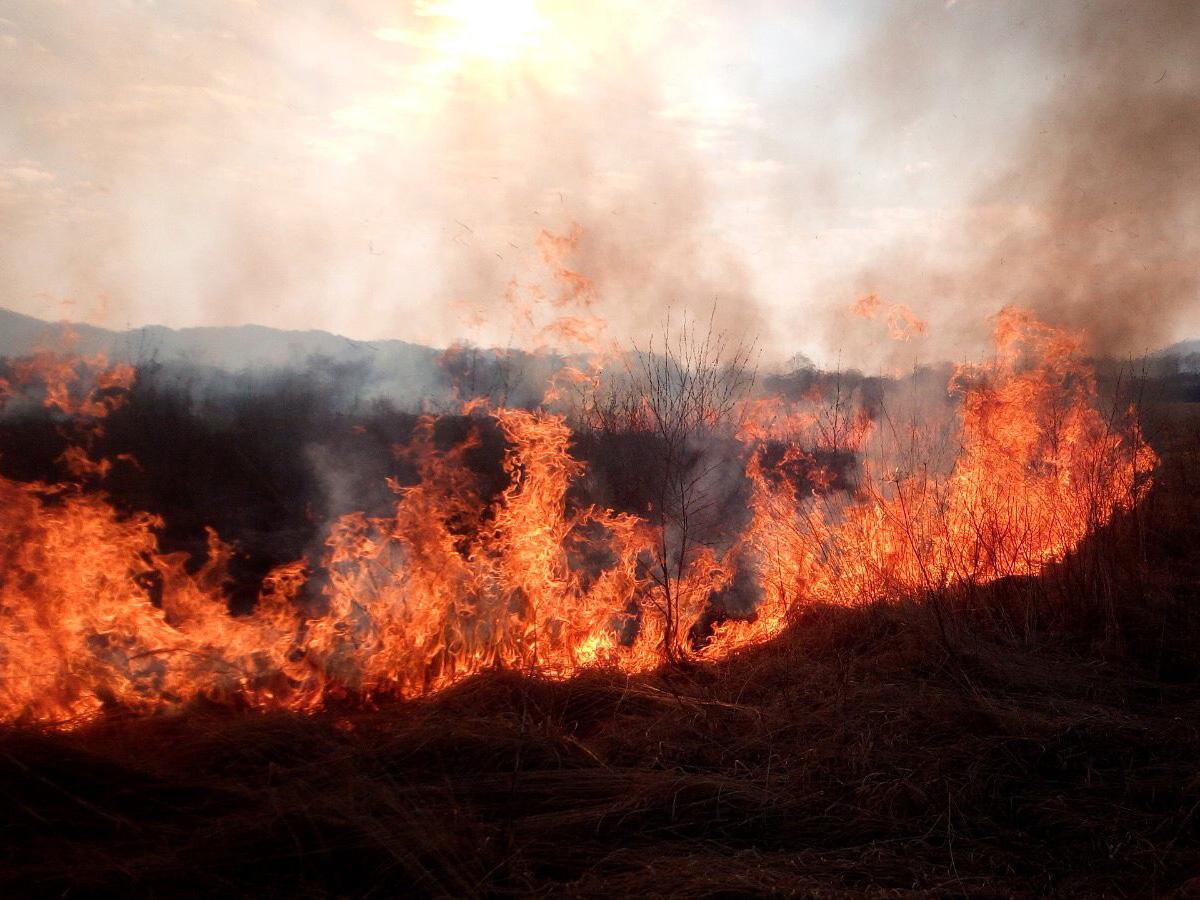 На Закарпатті у Долині нарцисів спалахнула пожежа