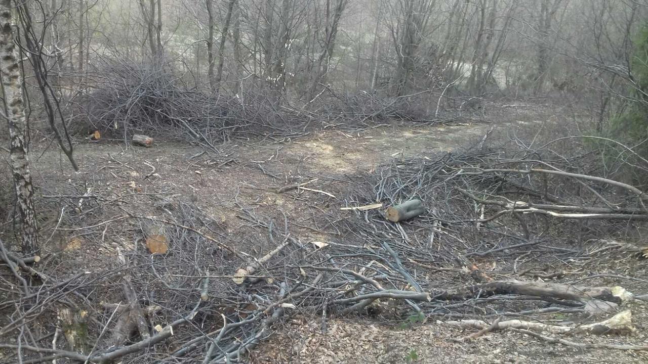 Під час патрулювання закарпатські прикордонники виявили незаконну вирубку лісу