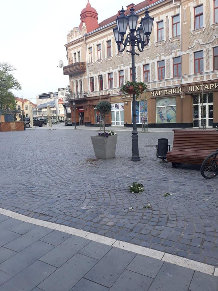 Вандал понищив висаджені в центрі Ужгорода квіти і скинув у річку урни