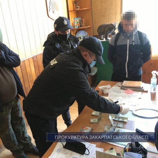 Закарпатські правоохоронці викрили лісничого, який вимагав хабара за відпуск необлікованої деревини