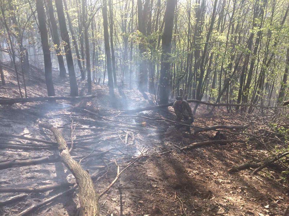 На Хустщині спалювали траву – загорівся ліс