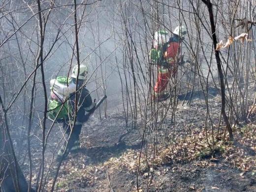 На Закарпатті стрімко зростає кількість пожеж в екосистемах