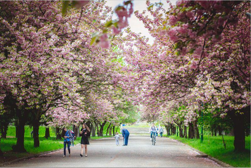 У Мукачеві з понеділка відкриють парки та торгові центри