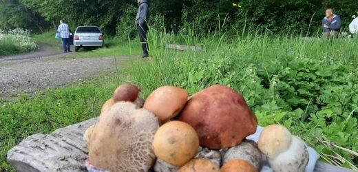 На Закарпатті з'явилися весняні гриби (фото)