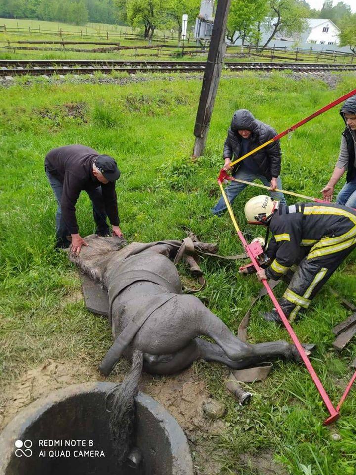 На Тячівщині рятувальники витягали коня з каналізаційного колодязя