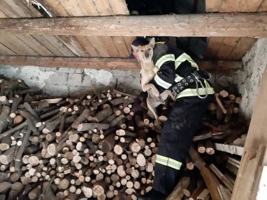 Іршавські пожежники врятували собаку, що застрягла на горищі (ФОТО)