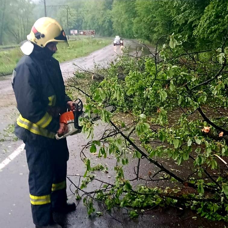На Перечинщині сильний вітер повалив дерево на дорогу