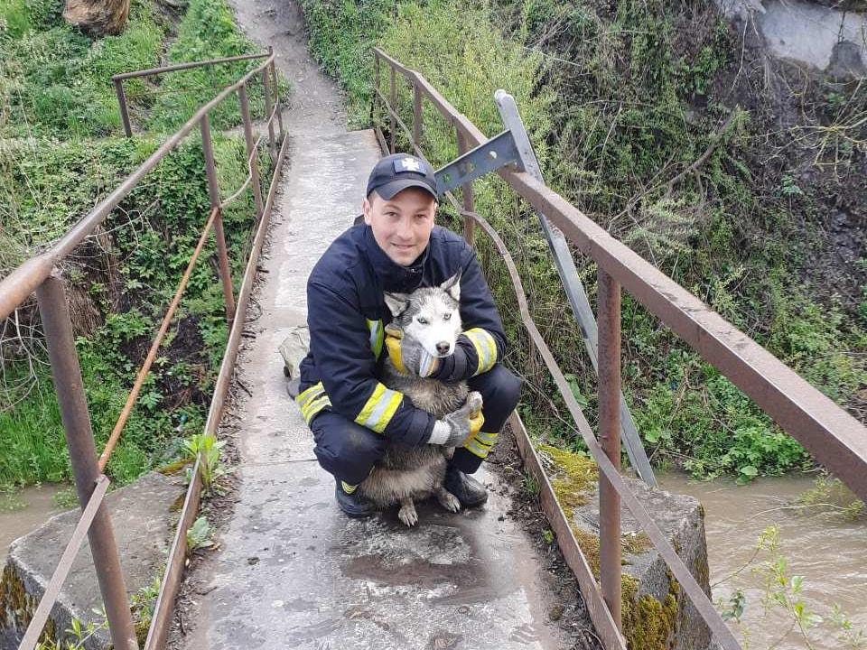 Воловецькі надзвичайники врятували цуценя хаскі, що опинилося у річці