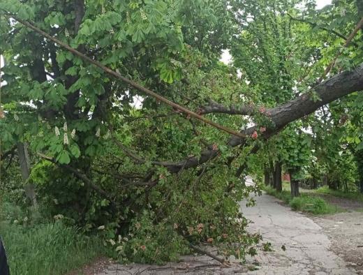 Через пориви вітру в Ужгороді дерево впало на газову трубу
