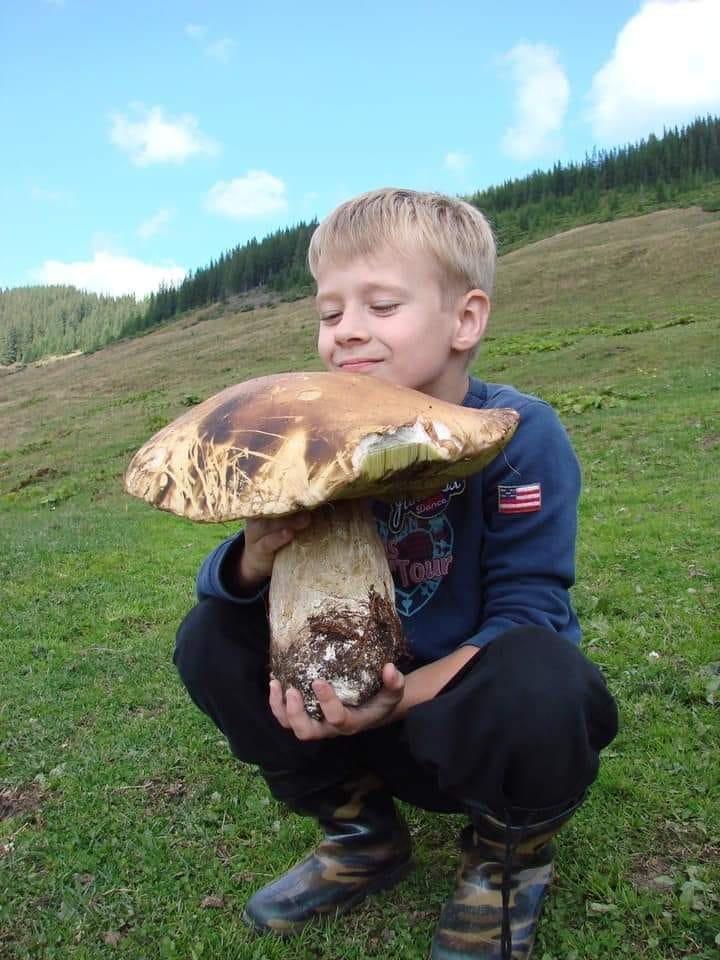 Гриб надзвичайно великого розміру знайшли у лісі на Воловеччині (ФОТОФАКТ)