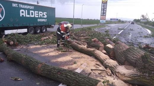 На Ужгородщині, повалене негодою дерево, перекрило дорогу