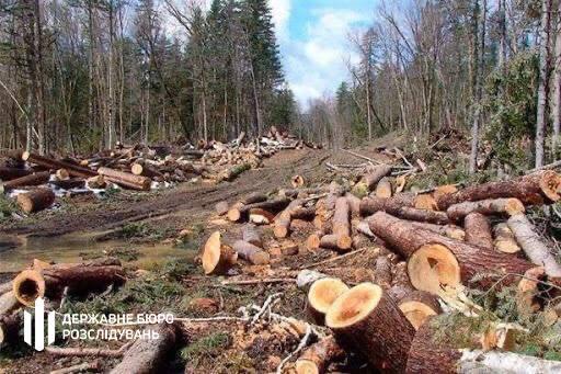 ДБР повідомило про підозру двом службовим особам Державної лісової охорони Закарпаття