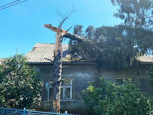Закарпатські рятувальники ліквідовують наслідки сильного вітру, що валив дерева (ФОТО)