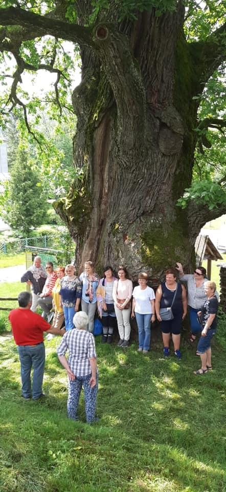 Тисячолітній дуб в Ужанському нацпарку перебуває в доброму здоров'ї (фото)