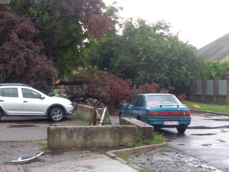 Буревій повалив дерева в Ужгороді (ФОТОФАКТ)