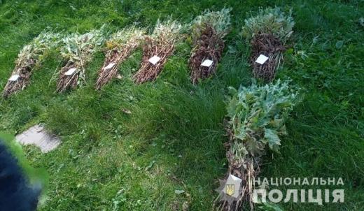 У мешканців двох районів Закарпаття виявили на городах незаконні посіви маку