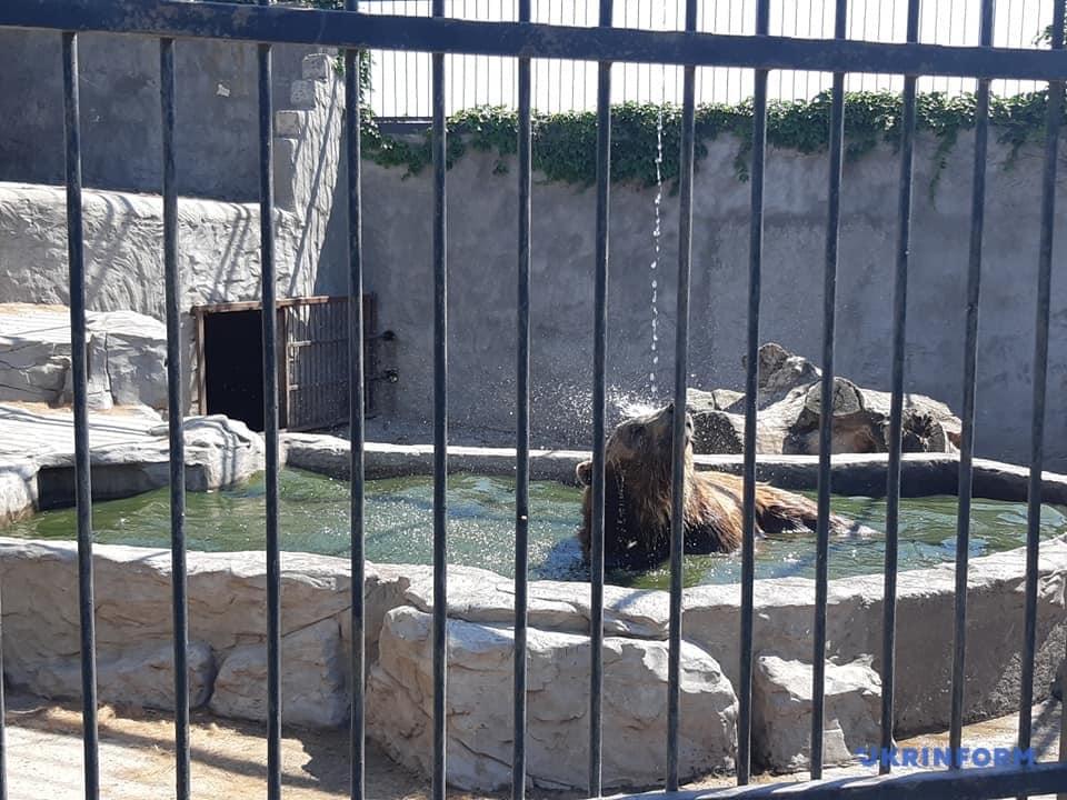 """У Національний природний парк """"Синевир"""" приїдуть на реабілітацію два ведмеді, врятовані із """"зоопарку смерті"""""""