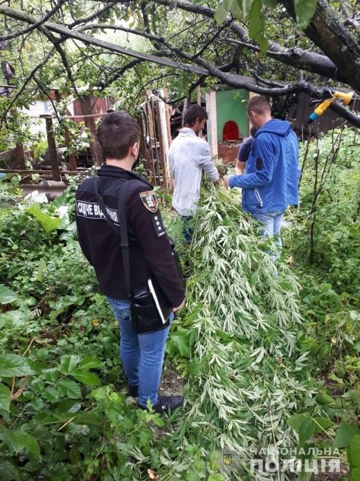 На городі мешканця Ужгородщини виявили наркоплантацію – 200 рослин конопель