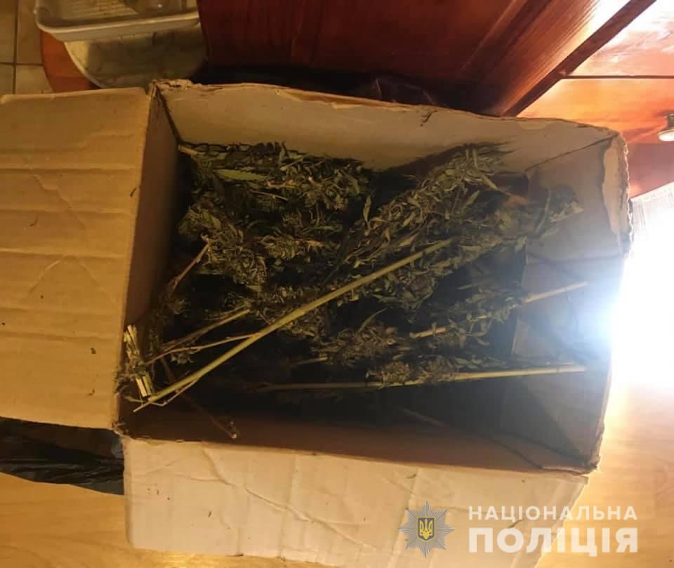 На обійсті мешканця Ужгородщини поліція знайшли три кіло марихуани