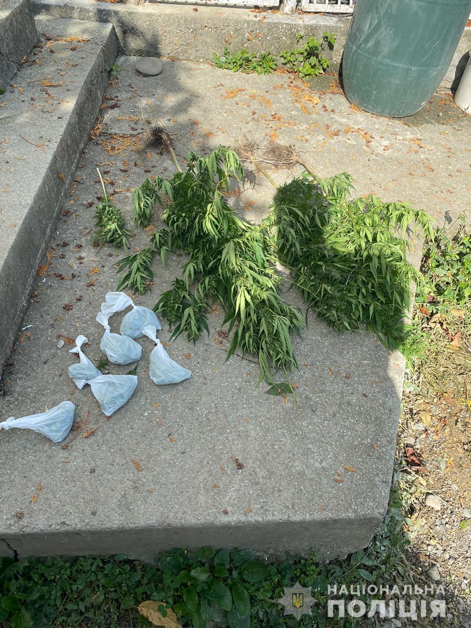 У мешканця Тячевщини поліція знайшла кущі конопель та пакети з марихуаною