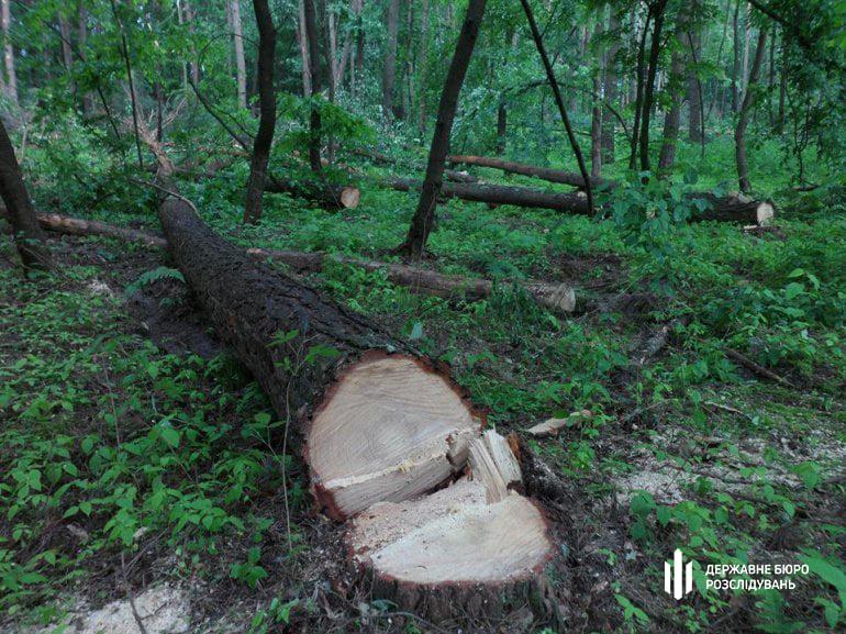 Посадовці Ясінянського ЛМГ допустили незаконну порубку дерев на 7 млн. гривень, – ДБР