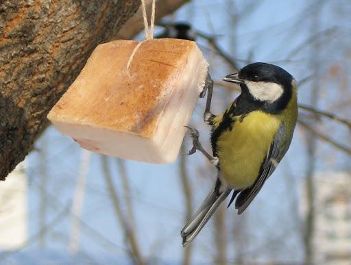 """Природоохоронна акція """"Підгодуй птаха взимку"""" проходить на Закарпатті"""