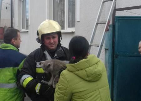 Хустські рятувальники повернули господарям котика, який два дні не міг спуститися з даху