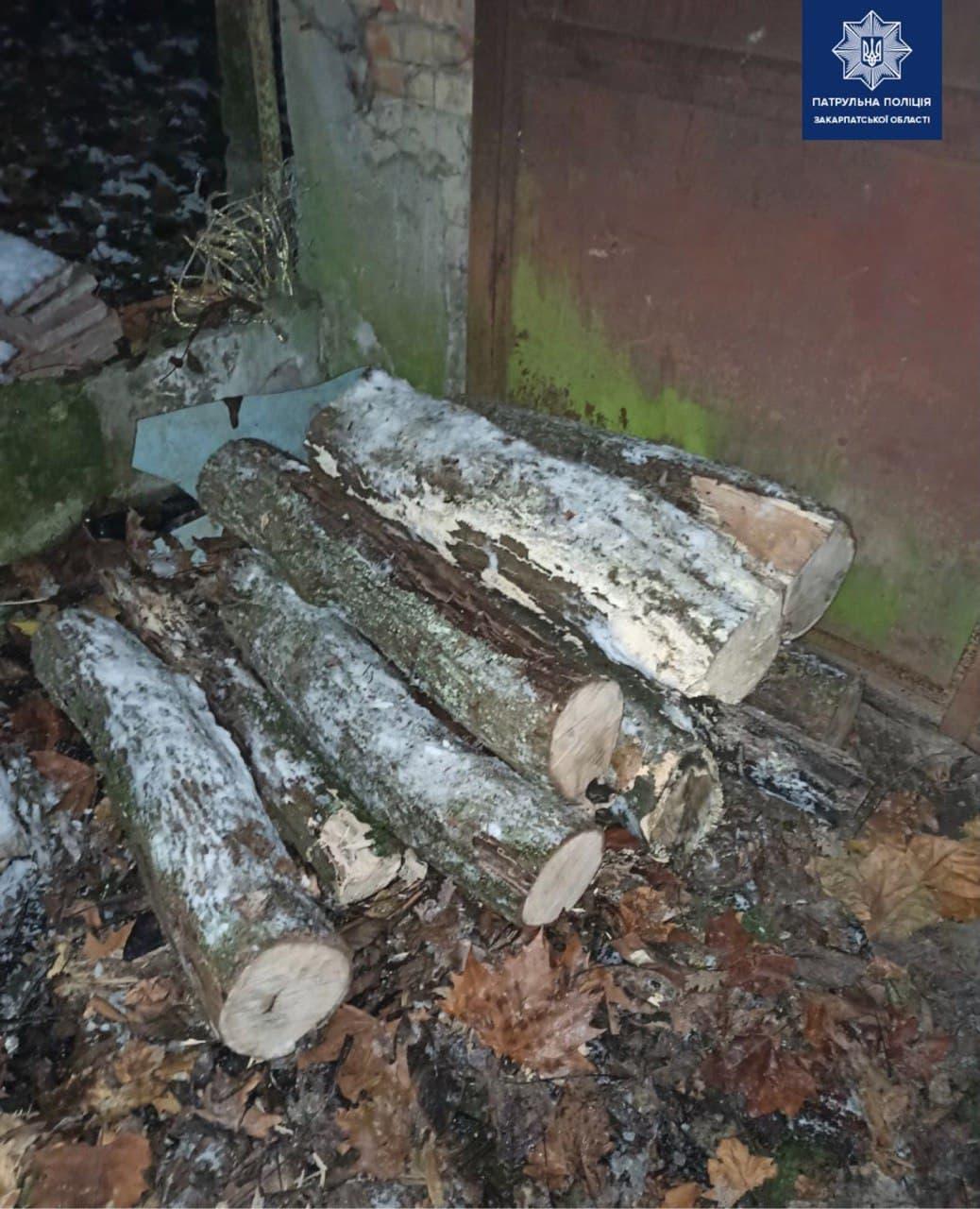 Уночі в Ужгороді патрульні спіймали чоловіка, який зрізав дерева у ботанічному саду