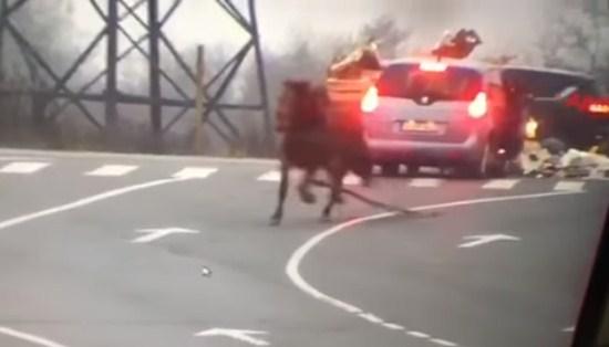 В Ужгороді ромський віз протаранив автівку (відео)