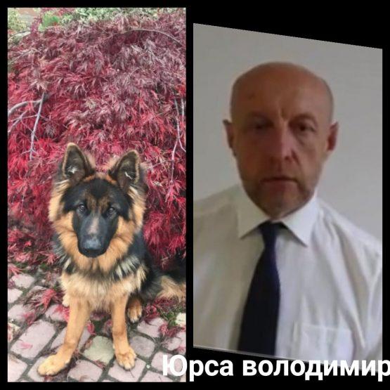 Кандидат в мери Ужгорода підозрюється в отруєнні сусідської собаки