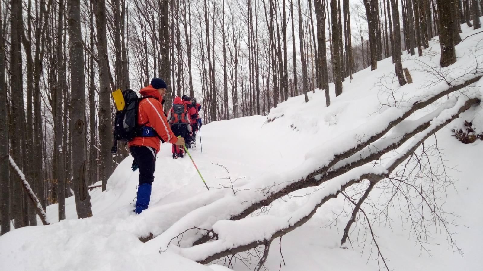 Пошуки заблукалого у горах на Закарпатті туриста тривають вже п'яту добу