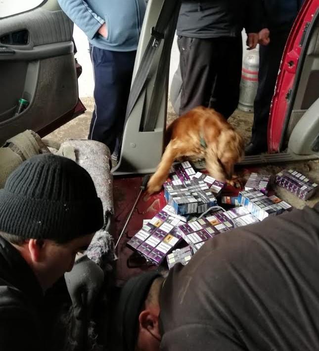 Службовий собака закарпатських прикордонників знайшов у авто іноземця цигаркову контрабанду