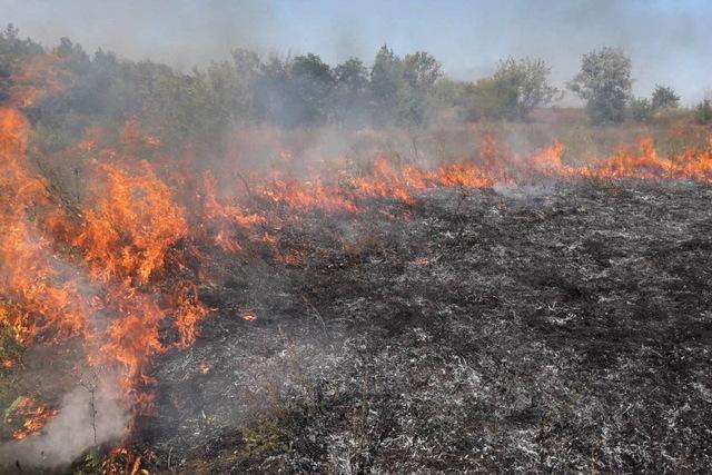 Спалюючи траву, жінка з Мукачівщини опинилася в реанімації з важкими опіками