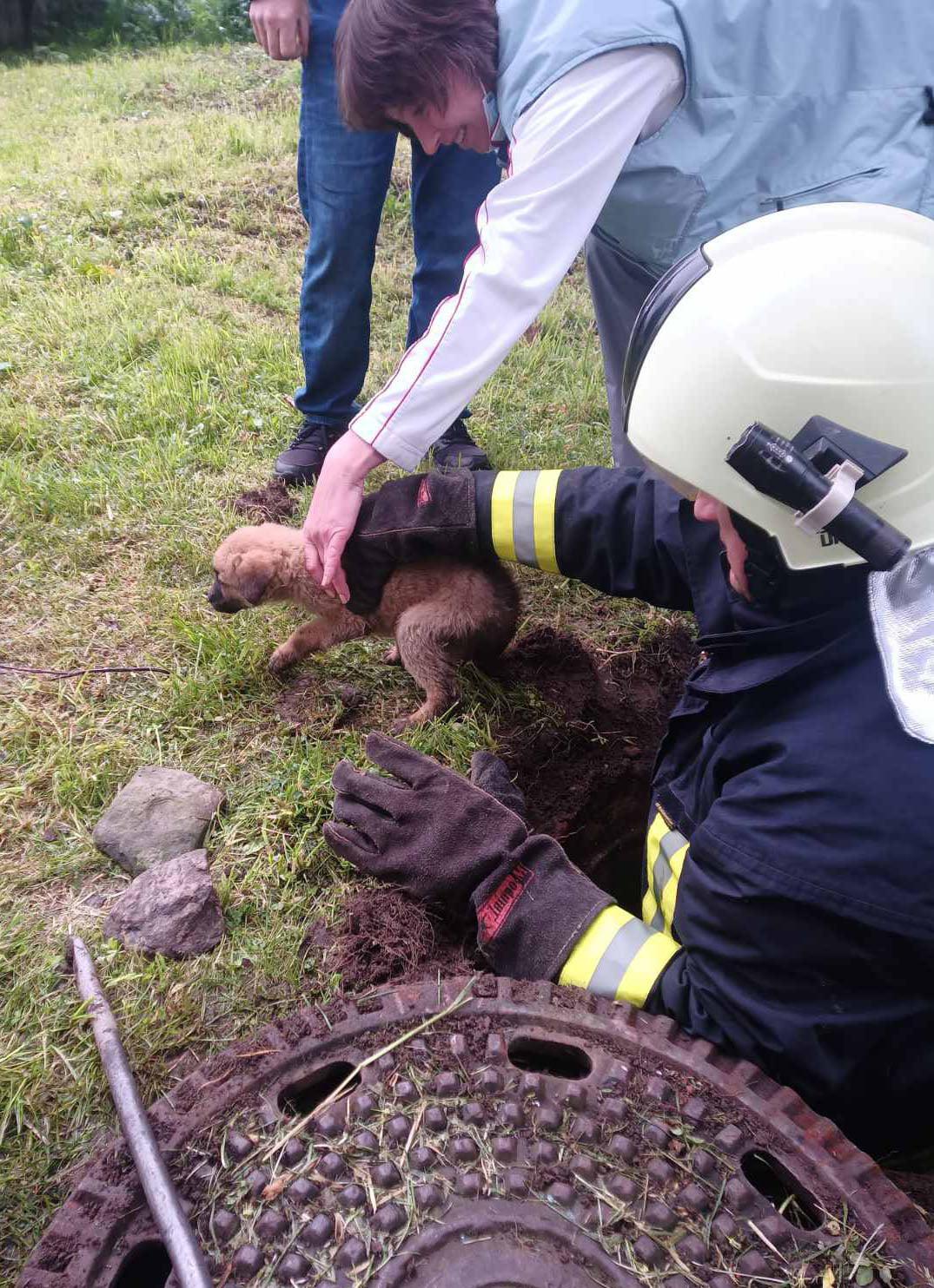 Воловецькі рятувальники витягли цуценя з каналізаційного люка