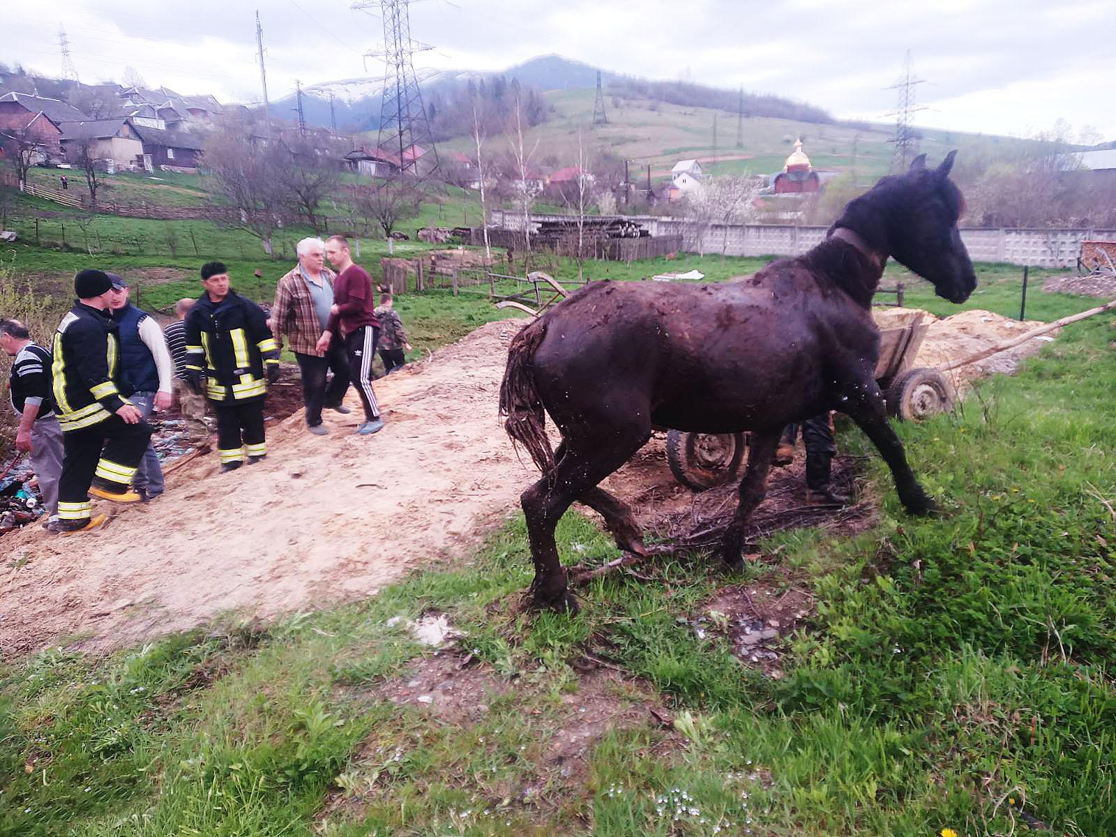 Рятувальники визволили двох коней, які провалилися в трясовину у Воловці