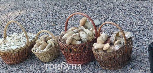 На Закарпатті кошик білих грибів коштує від 150 до 200 гривень (фото)